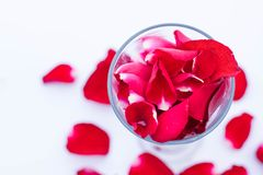 Beauty red rose petal in the glass and ground. Beauty red rose petal in the glass Stock Image