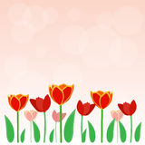 Beauty red tulip vector background. Or template Stock Image