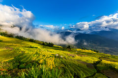 Beauty of ripen rice terraces Royalty Free Stock Images