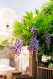 Beauty rooted in the large wisteria trellis Stock Photography