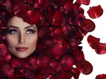 Beauty in Rose Petals Stock Photo