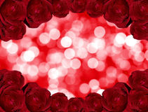 Beauty roses on red bokeh background. Stock Photography