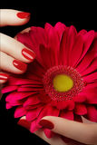 Beauty salon. Delicate hands with manicure holding pink flower Stock Photos