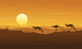 Beauty scenery kangaroo silhouette collection Stock Image