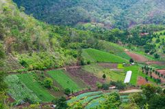 Beauty scenic agriculture landscape, agriculture countryside. Northern Thailand royalty free stock image