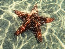 Beauty of the Sea. Even the ocean have his own star Royalty Free Stock Photo