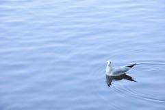 The beauty of the sea gull Stock Photos