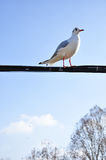 The beauty of the seagull Stock Photos