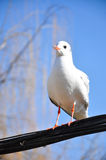 The beauty of the seagull Royalty Free Stock Image