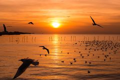 The beauty of the seagull on the sea at sunset Stock Photo