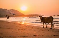 Beauty of seascape royalty free stock photos