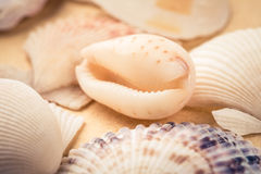 Beauty seashells closeup Stock Photos