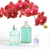 Beauty set with red orchid. A beauty set with perfume, body oil and a beautiful red orchid Stock Image