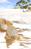 Beauty shells on the beach Royalty Free Stock Images