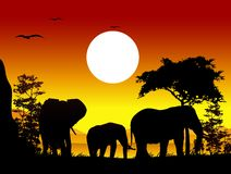 Beauty silhouette of elephant trip Stock Image