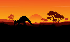 Beauty silhouette of kangaroo landscape Stock Photos