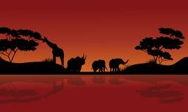 Beauty silhouette of safari animal Stock Photography