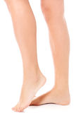 Beauty slim female legs, royalty free stock photography