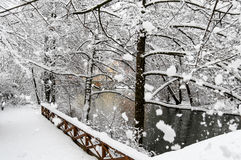 Beauty snowy scene-river and trees- huge snowflakes. White winter scenery park, bridge, river Pegnitz in Nuremberg, Germany, beauty covered trees, huge Stock Photo