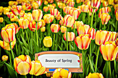 Beauty of Spring Royalty Free Stock Photography