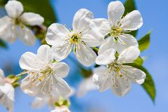 Beauty spring flowers Stock Photo