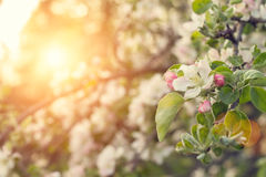 Beauty spring nature background. Stock Photos