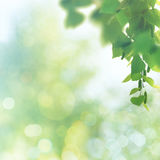 Beauty spring and summer backgrounds Stock Image
