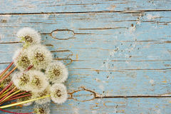 Beauty summer background with dandelions. Beauty summer background: fluffy dandelion and its seeds on an aged painted blue wood, top view Stock Image