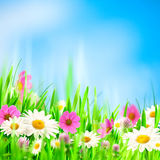 Beauty summer backgrounds Stock Images