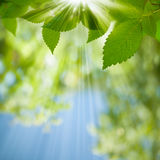 Beauty Summer Day. Stock Images