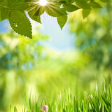 Beauty Summer Day. Abstract environmental backgrounds for your design Royalty Free Stock Photography