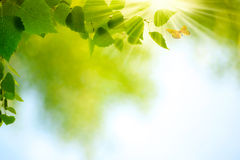 Beauty Summer Day royalty free stock image