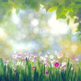 Beauty summer day, abstract rural landscape Stock Photos