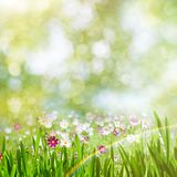 Beauty summer day, abstract rural landscape with blooming flower Royalty Free Stock Image
