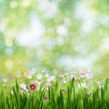 Beauty summer day, abstract rural landscape Stock Photography