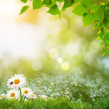 Beauty summer day on the meadow Royalty Free Stock Photos