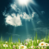 Beauty summer field. Royalty Free Stock Images