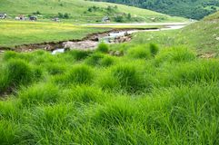 Beauty of summer green grass by the River Uvac at Pester Plateau in Serbia Royalty Free Stock Photo