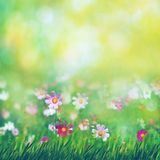 Beauty summer meadow with blooming flowers. Seasonal abstract backgrounds royalty free stock image