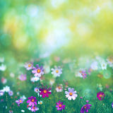 Beauty summer meadow with blooming flowers. Seasonal abstract backgrounds stock photos