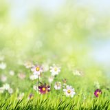 Beauty summer meadow with blooming flowers. Seasonal abstract backgrounds stock images
