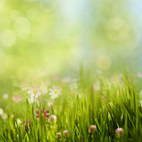 Beauty summer meadow with blooming flowers. Seasonal abstract backgrounds royalty free stock photo