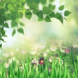 Beauty summer meadow with blooming flowers. Seasonal abstract backgrounds stock photo