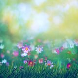 Beauty summer meadow with blooming flowers. Seasonal abstract backgrounds stock image