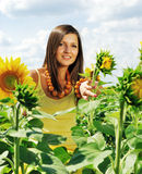 Beauty and sunflowers Royalty Free Stock Photography