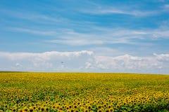 Beauty sunflowers field. Summer landscape: beauty sunset over sunflowers field stock images