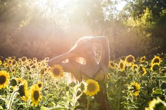 Beauty sunlit woman on yellow sunflower field Freedom and happiness concept royalty free stock photo