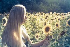 Beauty sunlit woman on yellow sunflower field Freedom and happiness concept royalty free stock images