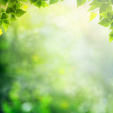 Beauty sunny day in the forest. Abstract natural backgrounds Royalty Free Stock Photography