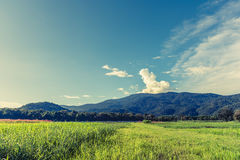 beauty sunny day on the rice field with sky and mountain in back Stock Image